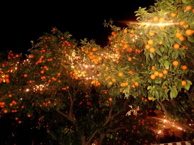 narancs (Small)